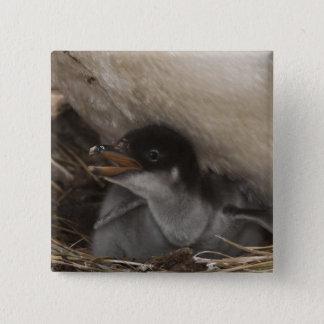 Gentoo Penguin (Pygoscelis papua) with chick, 2 15 Cm Square Badge