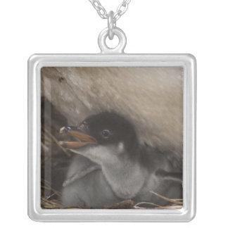 Gentoo Penguin (Pygoscelis papua) with chick, 2 Square Pendant Necklace