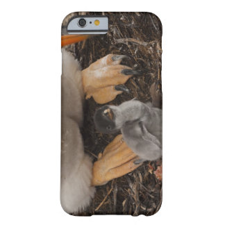Gentoo Penguin (Pygoscelis papua) with chick, Barely There iPhone 6 Case
