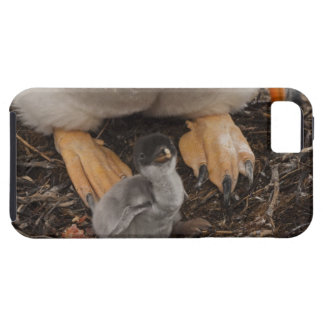 Gentoo Penguin (Pygoscelis papua) with chick, Case For The iPhone 5