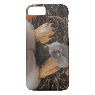 Gentoo Penguin (Pygoscelis papua) with chick, iPhone 8/7 Case