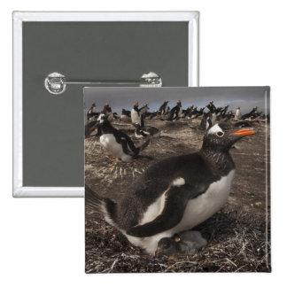 Gentoo Penguin (Pygoscelis papua) with chick on 15 Cm Square Badge