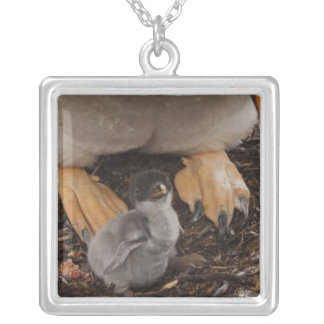 Gentoo Penguin (Pygoscelis papua) with chick, Silver Plated Necklace