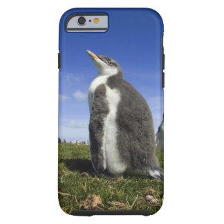 Gentoo Penguin, Pygoscelis papua, with fuzzy Tough iPhone 6 Case