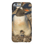 gentoo penguin, Pygoscelis papua, with newborn Barely There iPhone 6 Case