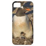 gentoo penguin, Pygoscelis papua, with newborn iPhone 5 Covers