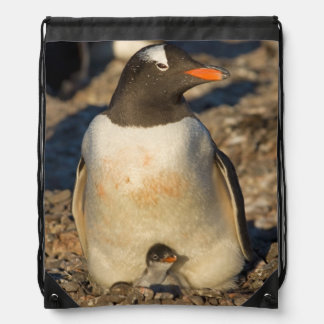 gentoo penguin, Pygoscelis papua, with newborn Drawstring Bag