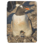 gentoo penguin, Pygoscelis papua, with newborn iPad Air Cover