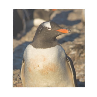 gentoo penguin, Pygoscelis papua, with newborn Notepad