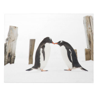 Gentoo Penguins Kissing Notepad