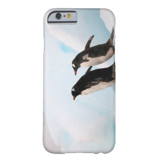 Gentoo penguins on rocky shoreline with backdrop 2 barely there iPhone 6 case