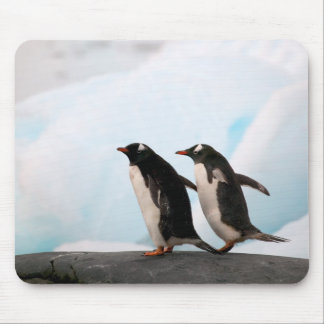 Gentoo penguins on rocky shoreline with backdrop 2 mouse pad