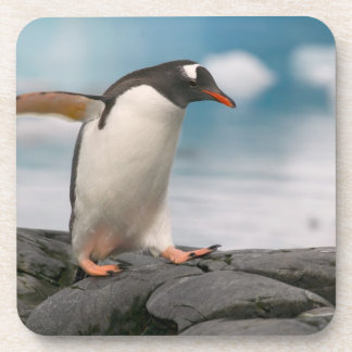 Gentoo penguins on rocky shoreline with backdrop 3 coaster
