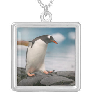 Gentoo penguins on rocky shoreline with backdrop 3 silver plated necklace