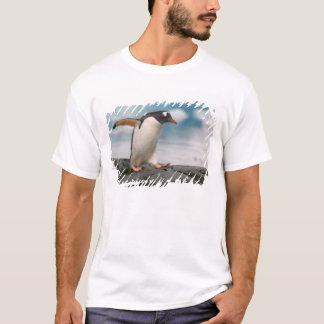 Gentoo penguins on rocky shoreline with backdrop 3 T-Shirt
