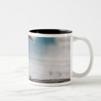 Gentoo penguins on rocky shoreline with backdrop 3 Two-Tone coffee mug