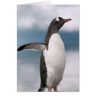 Gentoo penguins on rocky shoreline with backdrop card