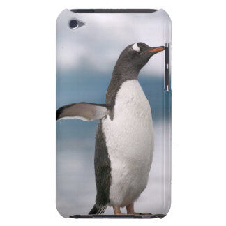Gentoo penguins on rocky shoreline with backdrop Case-Mate iPod touch case