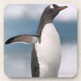 Gentoo penguins on rocky shoreline with backdrop coaster