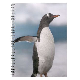 Gentoo penguins on rocky shoreline with backdrop spiral notebook