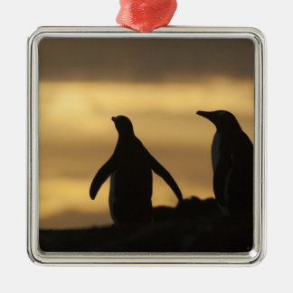 Gentoo Penguins Pygoscelis papua) at sunset Christmas Ornament