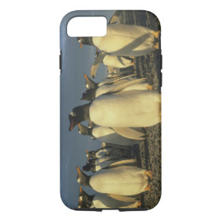 Gentoo Penguins, (Pygoscelis papua), Falkland iPhone 8/7 Case