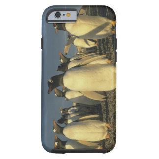 Gentoo Penguins, (Pygoscelis papua), Falkland Tough iPhone 6 Case