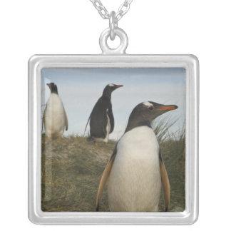 Gentoo Penguins (Pygoscelis papua), Keppel Silver Plated Necklace