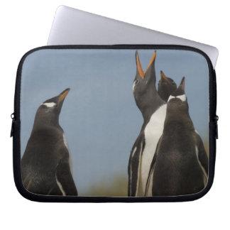 Gentoo Penguins (Pygoscelis papua) looking up, Laptop Sleeve