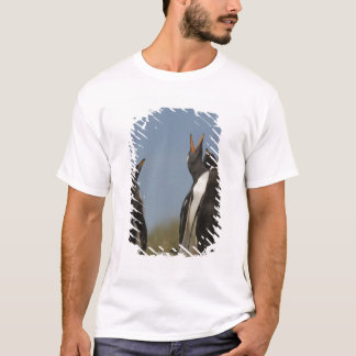 Gentoo Penguins (Pygoscelis papua) looking up, T-Shirt