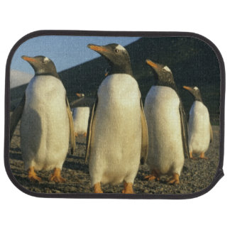 Gentoo Penguins, Pygoscelis papua), sunset, Car Mat