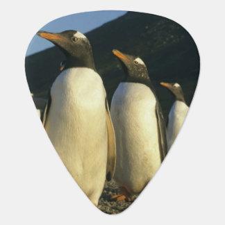 Gentoo Penguins, Pygoscelis papua), sunset, Guitar Pick