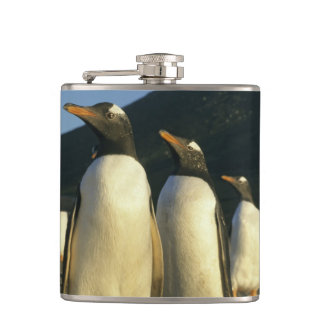 Gentoo Penguins, Pygoscelis papua), sunset, Hip Flask