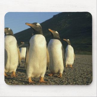 Gentoo Penguins, Pygoscelis papua), sunset, Mouse Pad