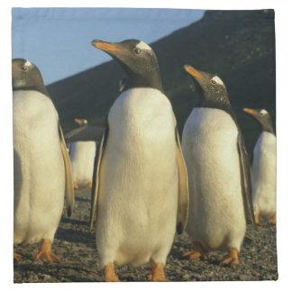 Gentoo Penguins, Pygoscelis papua), sunset, Napkin
