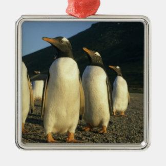 Gentoo Penguins, Pygoscelis papua), sunset, Silver-Colored Square Decoration