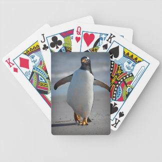 Gentoo taking a stroll playing cards