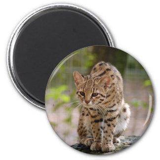 Geoffroy Cat Magnet