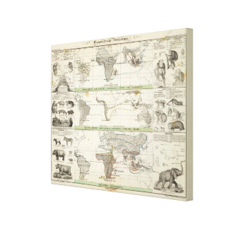 Geographical Distribution Canvas Print