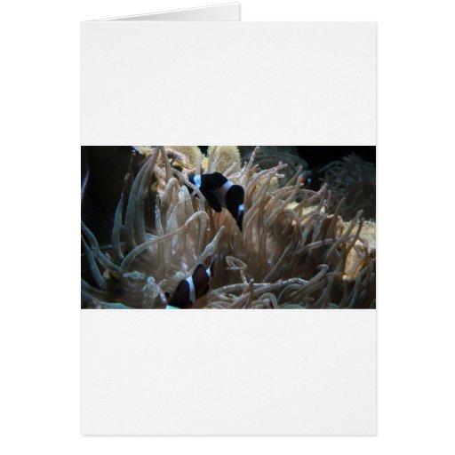 geordie clownfish card