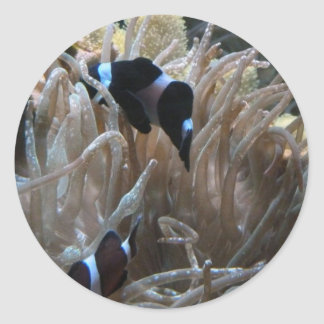 geordie clownfish classic round sticker