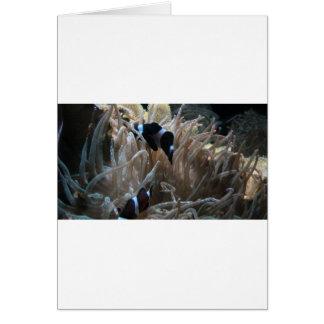 geordie clownfish greeting card