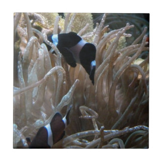 geordie clownfish tile