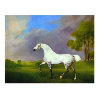 George Stubbs- A Grey Horse Postcard