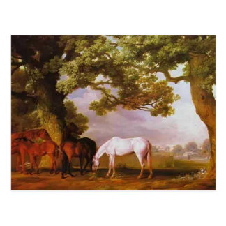 George Stubbs- Mares & Foals in a Wooded Landscape Postcard