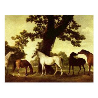 George Stubbs Postcard