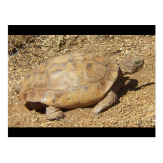 George the desert tortoise postcard