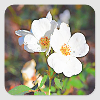 Georgia Cherokee Rose Sticker