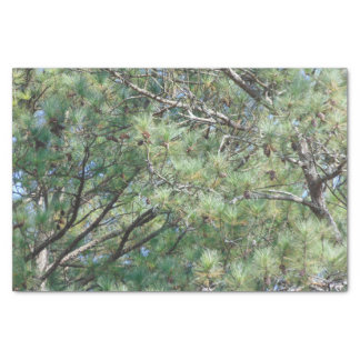 Georgia Pine Tree Branches 074 Tissue Paper