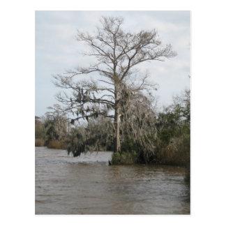 Georgia s swamp postcard